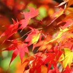 スマホを活用して綺麗な紅葉の写真を撮ってみよう!
