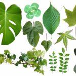 風水で選ぶ観葉植物 部屋別のおすすめと葉の形と運気の関係