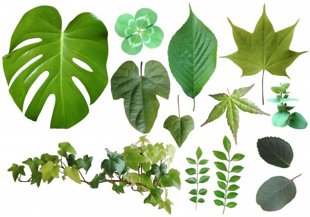 風水と観葉植物