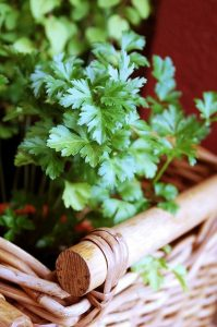 parsley-126155_640