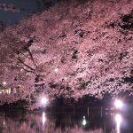吉祥寺の井の頭公園でのお花見。場所取りや買い出しについて