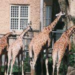 多摩動物公園に子供と行く。園内のランチや移動はどうする?