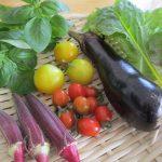 父の日に家庭菜園が好きな父に熱中症対策のプレゼントを考えてみる